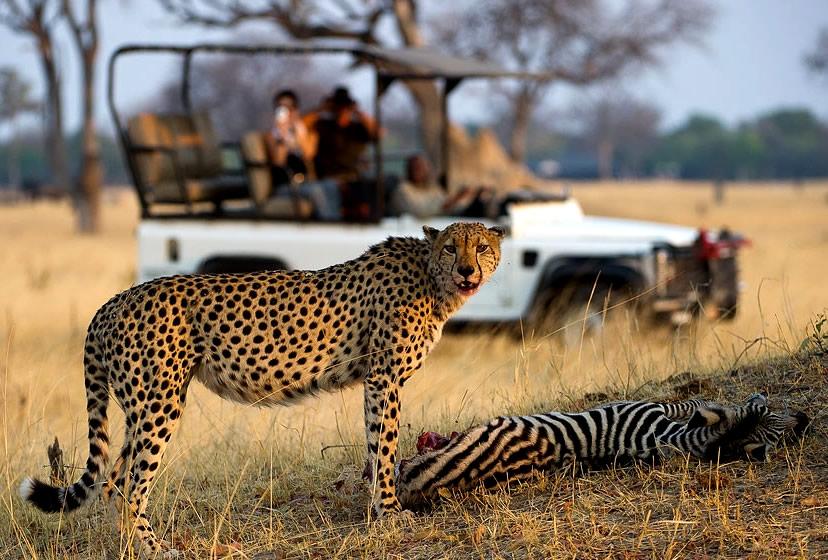 sa-safari